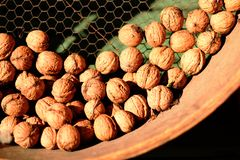 Autumn feeling walnuts. Some dozen of walnuts in a traditional storage bowl Royalty Free Stock Photos