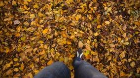 Autumn Feet Walking stock video