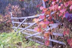 Autumn Fence Immagine Stock Libera da Diritti