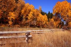 Autumn Fence 3 Stock Image