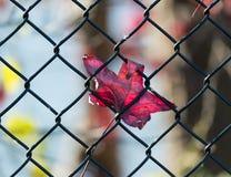 Autumn Fence Royalty-vrije Stock Afbeelding