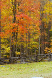 Autumn fence alpha. Autumn foliage and a split rail fence royalty free stock photography