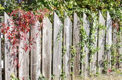 Autumn Fence Stock Photography