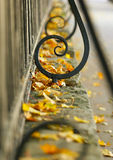 Autumn. The fence and yellow leaves. Royalty Free Stock Images
