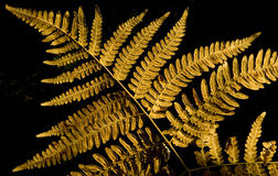Autumn fern leaf Royalty Free Stock Photography