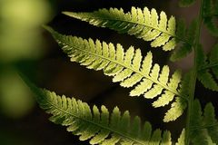 Autumn Fern leaf in the forest royalty free stock photo