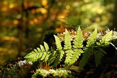 Autumn Fern Leaf In The Forest Stock Images