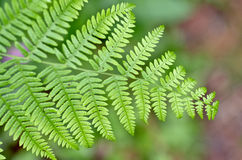 Autumn ferns Stock Photos