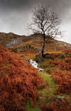 Autumn Ferns in the Lake District. Autumn Ferns and bracken in the Lake District England Royalty Free Stock Image