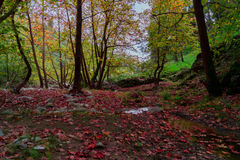 Autumn fever. Stock Images