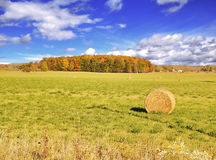 Autumn Field Royalty Free Stock Photos