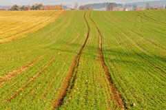 Autumn Field Royalty Free Stock Image