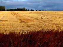Autumn Field Royalty-vrije Stock Afbeeldingen