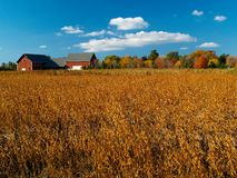 Autumn field. With colorful trees and blue cloudy sky in background (E-1 + olympus zuiko 24mm F2.8 Stock Photos