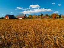Autumn field Stock Photos
