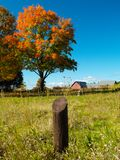 Autumn field. With colorful trees (E-1 + olympus zuiko 24mm F2.8 Stock Photos