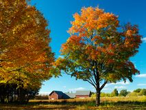 Autumn field Royalty Free Stock Photography