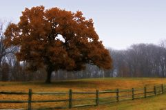 Autumn Field. An Autumn Farm Field after the fog burns off in the morning Royalty Free Stock Images