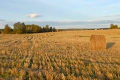 Free Autumn Field Royalty Free Stock Image - 6562166
