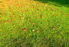 Autumn Field. A grass field covered by autumn fallen leaves Royalty Free Stock Images