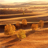 Autumn field. A golden autumn field,it is named bashang Stock Image