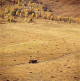 Autumn field. A golden autumn field,it is named bashang Royalty Free Stock Photography