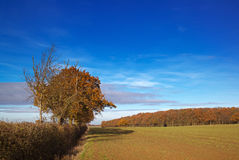 Autumn Field Royalty Free Stock Photo