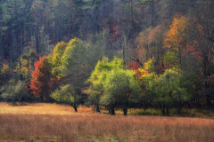 Autumn Field. A field in the mountains during autumn Royalty Free Stock Images