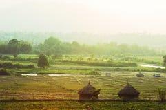 Autumn Field Asian Landscape - Thailand royalty free stock photo