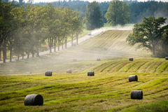 Autumn field. In bright day in countryside with rolls of hay Stock Image
