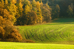 Autumn field. Color autumn field, green field Royalty Free Stock Photos