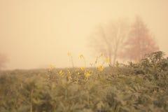 Autumn field Stock Photo