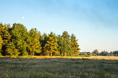The autumn. Field and forest in the sunset light of the Sun. Stock Image