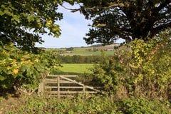 Autumn field gate Stock Image