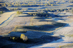 Autumn field with golden birch trees Stock Photos