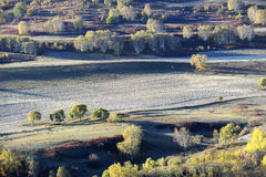Autumn field with golden birch trees Royalty Free Stock Photo