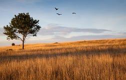 Autumn field Stock Image
