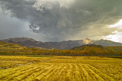 Autumn field of harvest Dark clouds. Autumn field of harvest,Taken in China Huzhu County, Qinghai in 2016.10.2 Stock Images