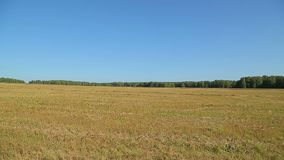Autumn field is a harvest on a Sunny day stock video footage
