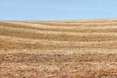 Autumn field after harvesting soybean Royalty Free Stock Photos