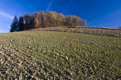 Autumn field landscape Royalty Free Stock Photo