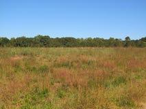 Autumn Field Landscape Royalty Free Stock Photo