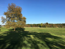 Autumn field in later afternoon Stock Photography