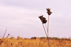 Autumn field. Minimalistic landscape of autumn field, the seed has replaced greenery Stock Photography