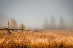 Autumn field in the morning Royalty Free Stock Image