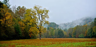 Autumn field in mountains Stock Images