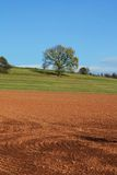 Autumn field oak tree Royalty Free Stock Photo