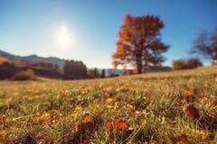 Autumn field, orange tree defocused Royalty Free Stock Image