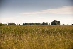 Autumn field. Photo of Autumn field in vojvodina Royalty Free Stock Photos