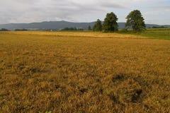 Autumn field - Poland. Autumn field - landscape in Poland Stock Photo